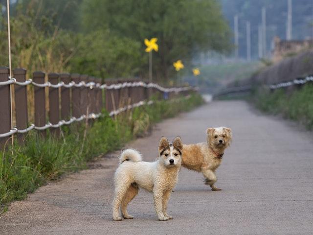 Två små hundar