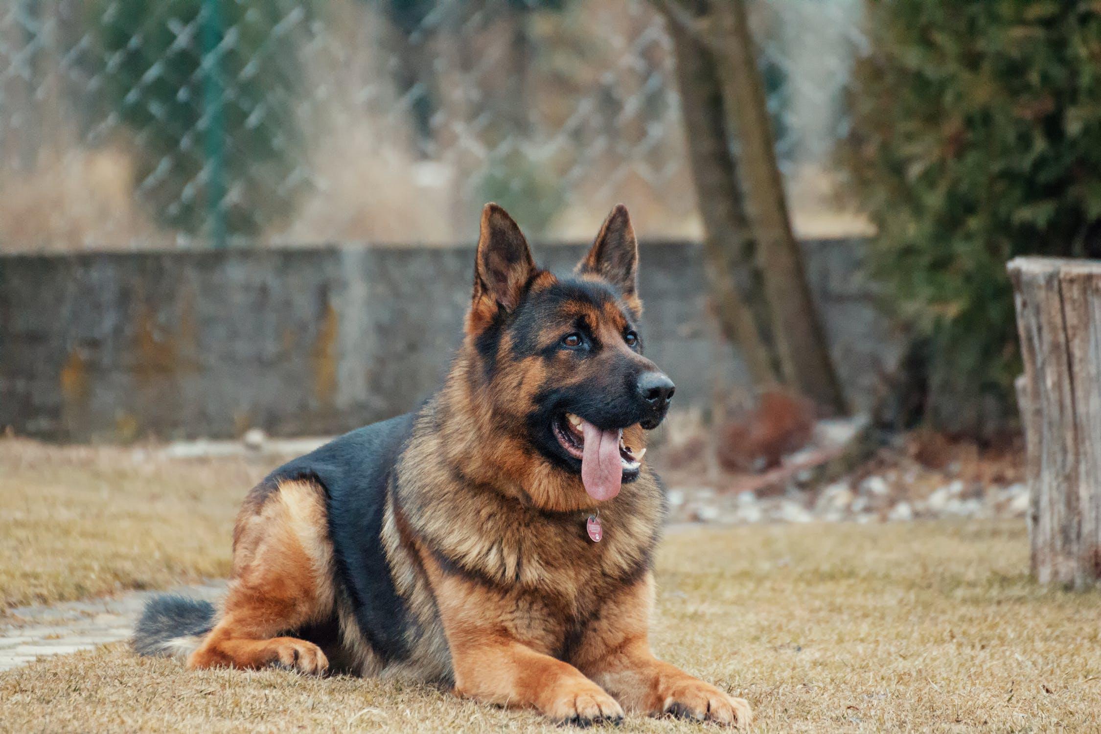 Stora hundar kräver mer motion